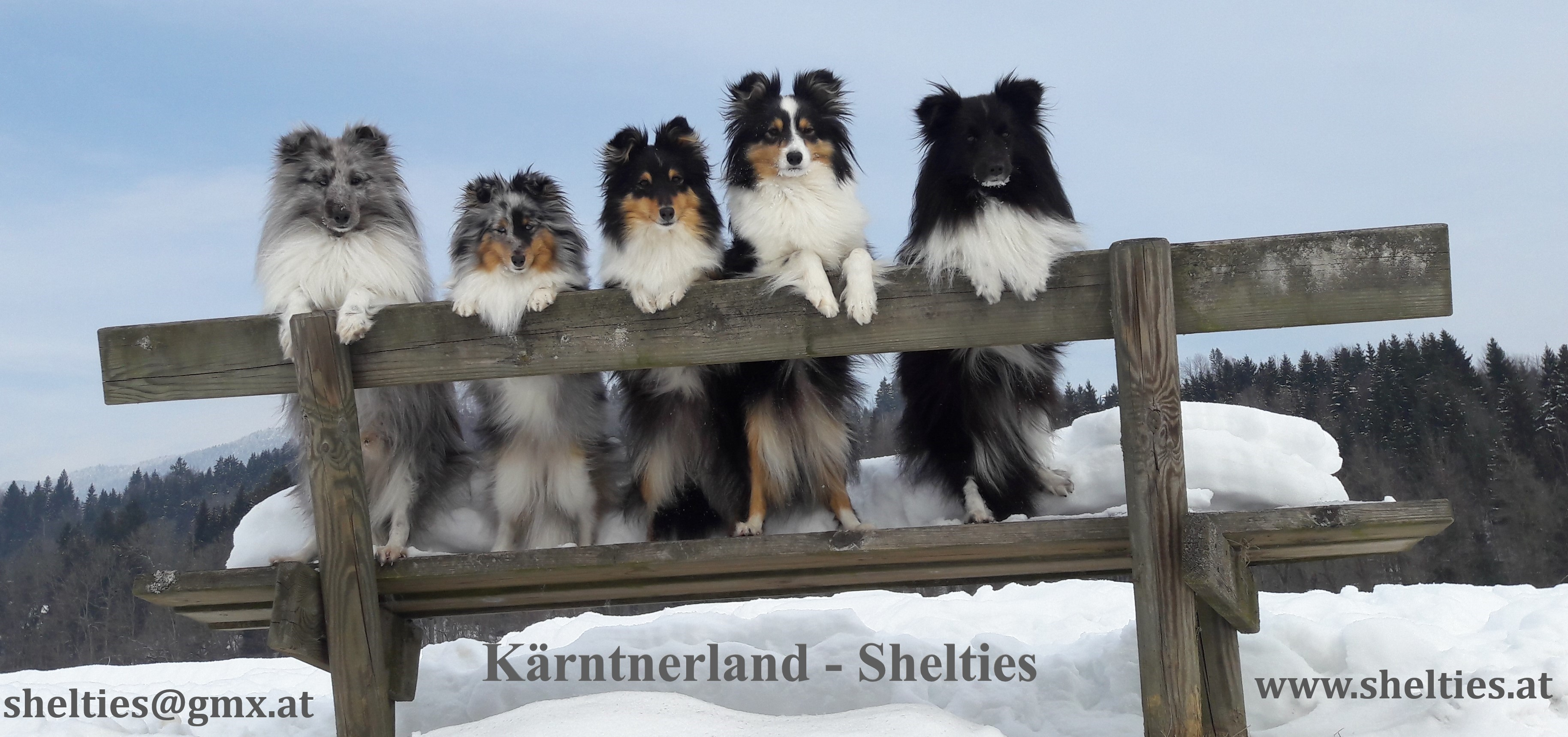 Kärntnerland-Shelties